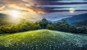 57557317 - trees on hillside of mountain range with coniferous forest and flowers on meadow. composite image day and night with full moon